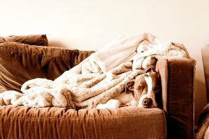 Image of couch with dog and blankets
