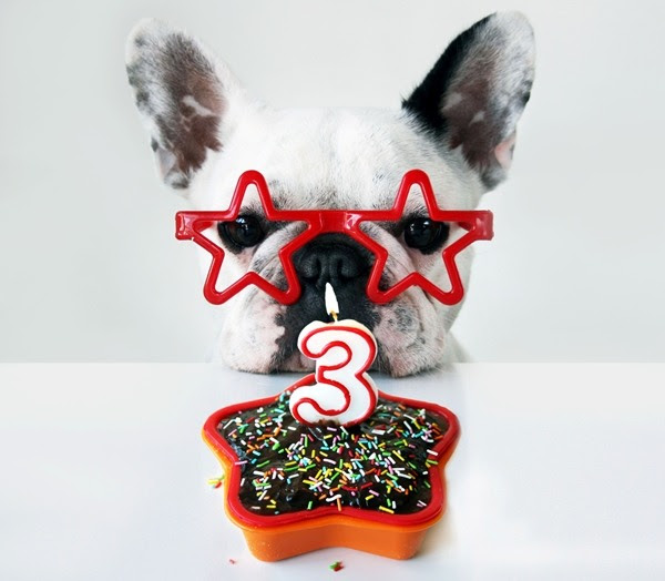 "A french bulldog wearing star-shaped glasses sits in front of a star-shaped cake with a ""3"" candle in the center of it"